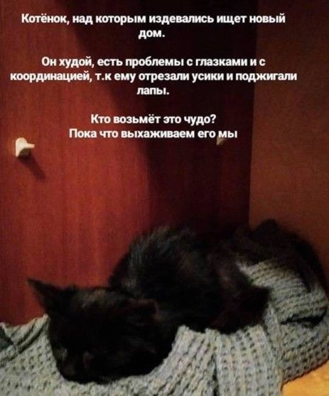 Котёнок над которым издевались ищет новый дом!